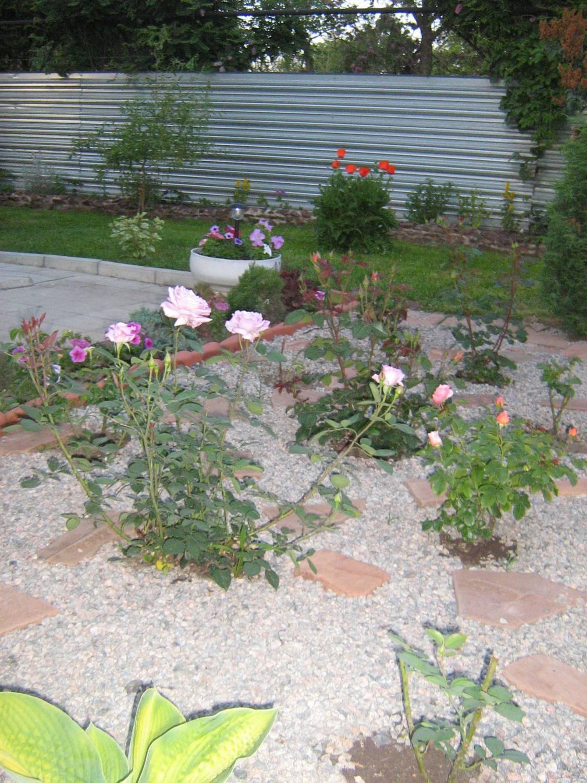 Клумба из роз своими руками - фото оформления розария на даче 59