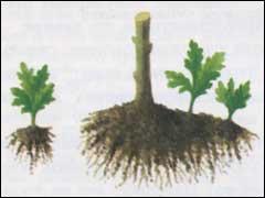 Печки садовые своими руками 19